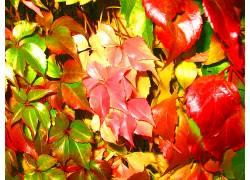 20893,地球,叶子,富有色彩的,壁纸图片
