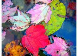 20895,地球,叶子,壁纸图片