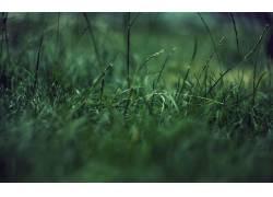 64108,地球,草,壁纸图片