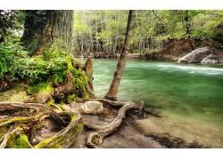 79193,地球,河,水,树,根,壁纸图片