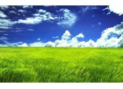 79381,地球,草,壁纸图片