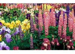 121056,地球,花,花,虹膜,狼的,壁纸