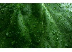 64299,地球,水,滴,雨点,植物,叶子,绿色的,自然,壁纸