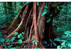 64319,地球,树,树,壁纸图片