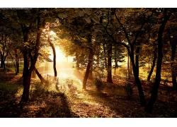 21627,地球,风景优美的,摄影,森林,树,阳光,国家,太阳,壁纸图片