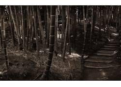 85656,地球,竹子,森林,壁纸图片