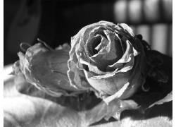 60310,地球,花,花,壁纸