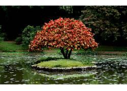 85664,地球,树,树,水,花,壁纸图片
