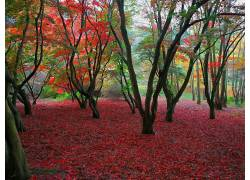 22540,地球,秋天,叶子,树,壁纸