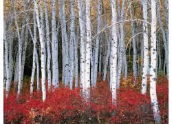 22543,地球,森林,树,壁纸图片