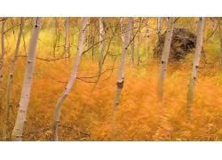 118411,地球,森林,壁纸图片
