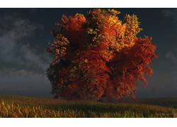 77387,地球,树,树,风景,壁纸