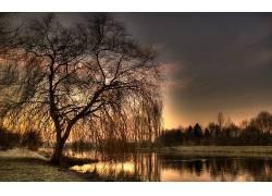 86175,地球,风景优美的,树,水,日落,壁纸图片