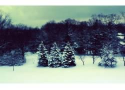 86210,地球,冬天的,树,雪,壁纸图片