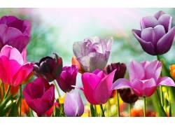 118568,地球,郁金香,花,花,壁纸图片