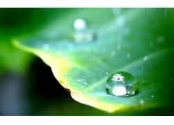 86238,地球,水,滴,水,叶子,植物,共价的,丛林,摄影,肖像,壁纸