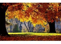 118808,地球,秋天,壁纸