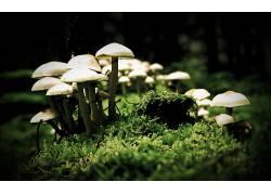 78586,地球,蘑菇,壁纸图片