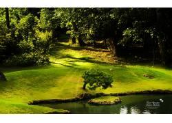 63118,地球,树,树,壁纸图片