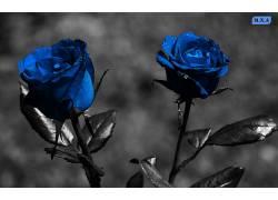118882,地球,玫瑰,花,花,壁纸