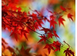 23654,地球,叶子,壁纸图片