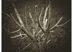 64076,地球,树,树,壁纸图片
