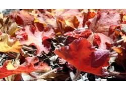 79120,地球,叶子,壁纸图片