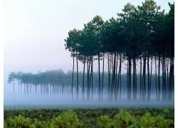29480,地球,森林,壁纸图片