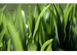 87105,地球,草,壁纸图片