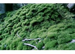 121294,地球,苔藓,壁纸