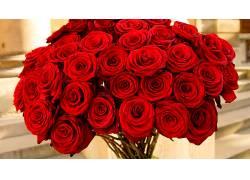121344,地球,玫瑰,花,红色,玫瑰,花,壁纸