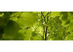 30766,地球,叶子,树枝,树,壁纸