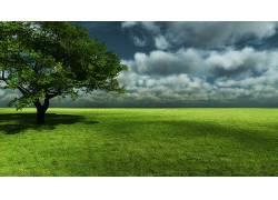 87483,地球,树,树,摄影,风景,草,领域,云,天空,地平线,地平线,叶图片