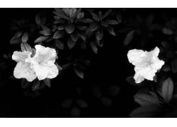 31183,地球,花,花,壁纸图片