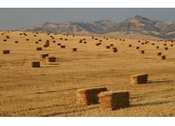 80342,地球,干草堆,风景,小麦,领域,国家,壁纸图片
