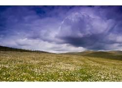 87502,地球,风景,草,花,天空,领域,壁纸图片