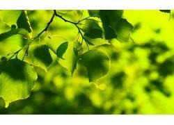 121424,地球,叶子,壁纸图片