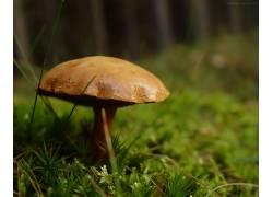 32037,地球,蘑菇,壁纸图片