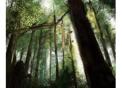 121608,地球,森林,壁纸图片