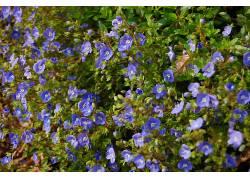 35487,地球,花,花,壁纸图片