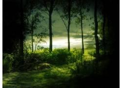 35758,地球,树,树,森林,壁纸图片