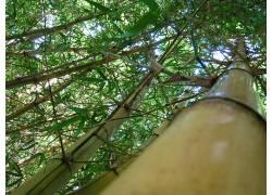 68071,地球,森林,壁纸图片