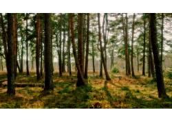 80484,地球,森林,树,渴望,壁纸图片