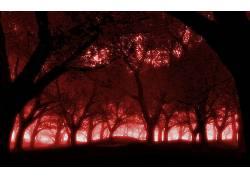 80595,地球,森林,壁纸图片