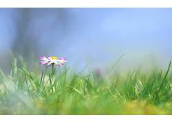 121651,地球,花,花,蜡笔,自然,草,壁纸图片