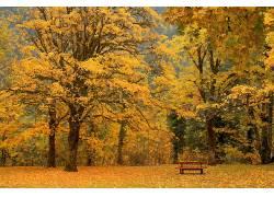 68338,地球,树,树,秋天,野餐,nehalem,华盛顿,壁纸