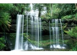 82069,地球,瀑布,瀑布,水,树,蕨,岩石,塔斯马尼亚岛,绿色的,壁纸图片