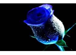 122404,地球,玫瑰,花,花,壁纸
