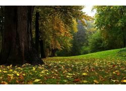 122408,地球,森林,壁纸