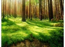 122409,地球,森林,壁纸图片
